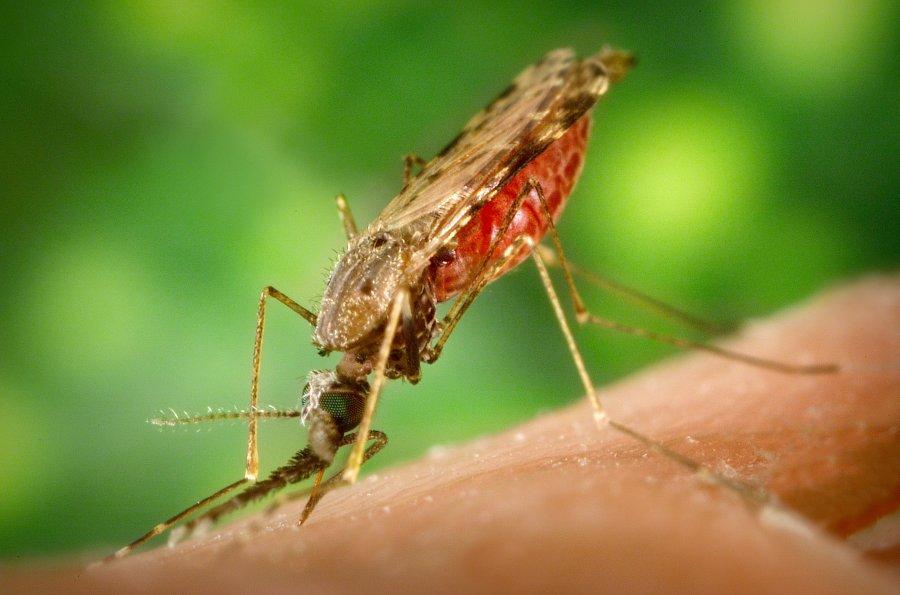 Πρόγραμμα καταπολέμησης κουνουπιών